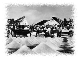 salinieri al lavoro nelle saline di margherita di savoia